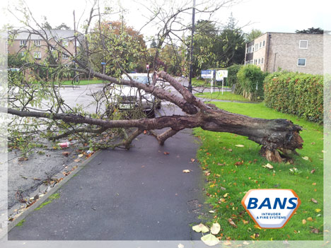 Photograph of a BMW in Maidenhead which was so very nearly crushed by a falling tree during hurricane St. Jude
